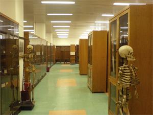 Τα Πανεπιστημιακά Μουσεία ανοικτά στο κοινό